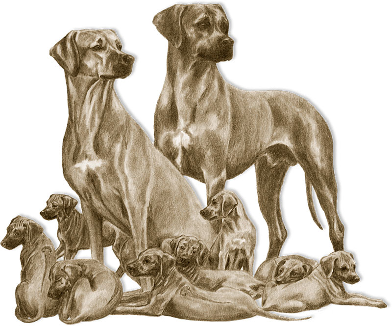 Rhodesian Ridgeback Pedigree Search